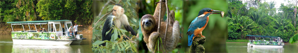 two types of Sloths, 3 species of Monkeis and birds evrywhere in Cano Negro